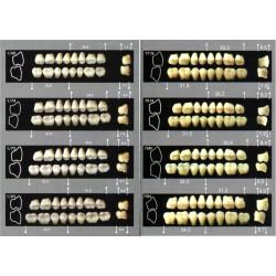 Zęby Major Super Lux boki górne